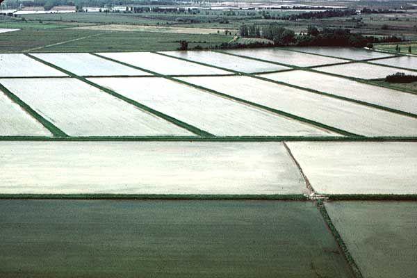 Senza aiuto accoppiato a rischio la risaia italiana