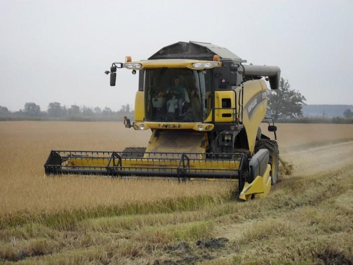 Centomila ettari di risaia rischiano l'abbandono