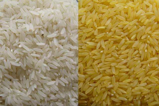 Lotta al Brusone del riso: una possibilità con gli Ogm?
