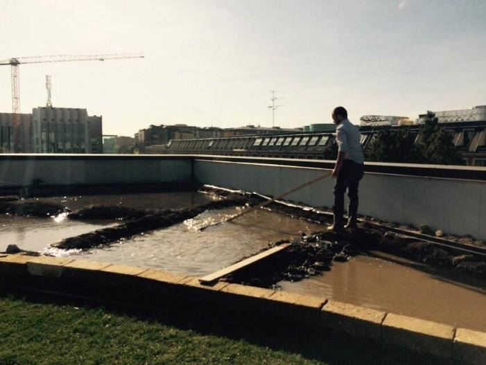 Su quel tetto di Milano c'è una risaia e non scotta come la gatta (fotogallery)