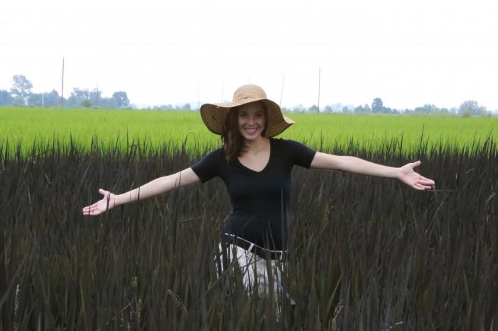 Viola e arancio, la nuova frontiera della risaia di Eleonora (fotogallery)
