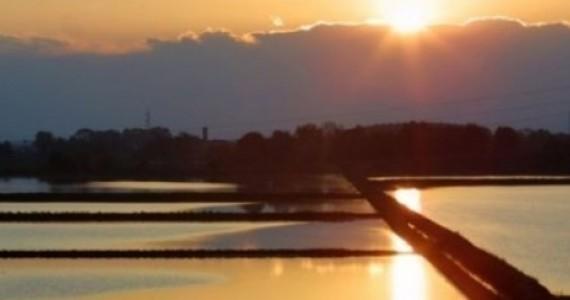 Avvisi ai naviganti: winter rice, sognando California