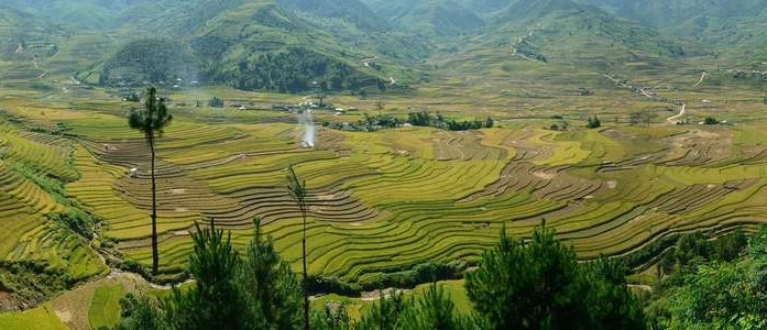 Troppo e fuorilegge il riso in arrivo dal Sudest asiatico