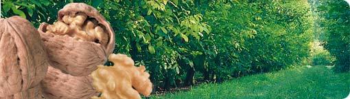 Noci, nocciole, pistacchi: il trionfo della frutta secca