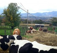 Banco BPM interviene con mungitrici e container per gli allevatori di Amatrice