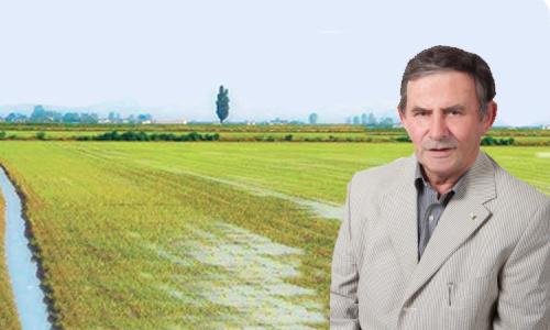 Ferraris: il riso rischia di fare la fine dello zucchero