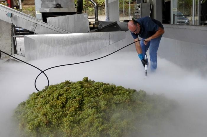 Neve e nebbia artificiali in cantina per salvare le uve Moscato dal caldo