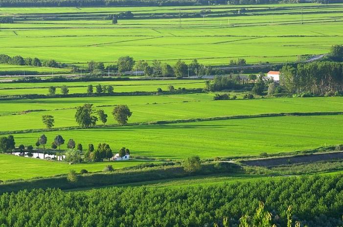 Ferrara in Senato: attivare la clausola di salvaguardia per il riso