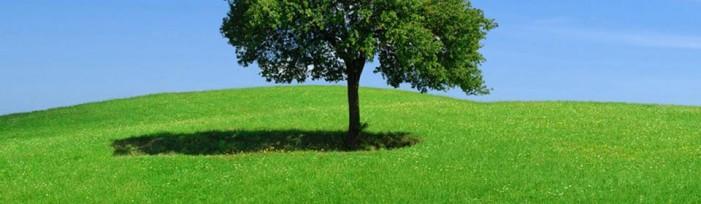 Focus sulla chimica verde e l'agroalimentare