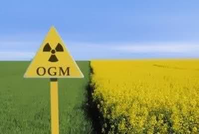 Ogm, grandi manovre delle multinazionali e pericolo per i consorzi agrari