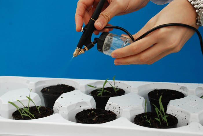 Erbicida naturale ricavato dalle cattive erbe