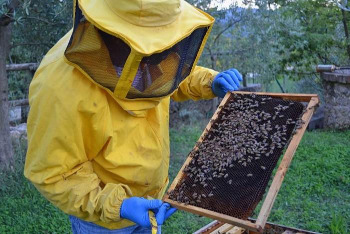 2017, l'annus horribilis del miele: persi oltre 20 milioni di euro