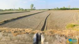 Il futuro del riso vercellese