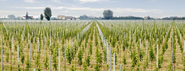 IdeA Taste of Italy (De Agostini) investe nel vino