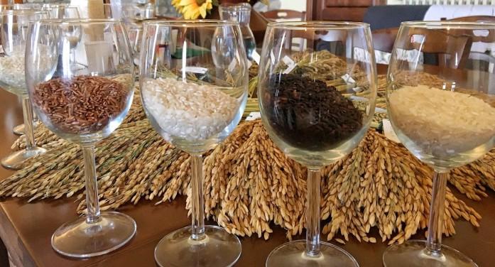 Pillole di riso, come diventare analisti sensoriali