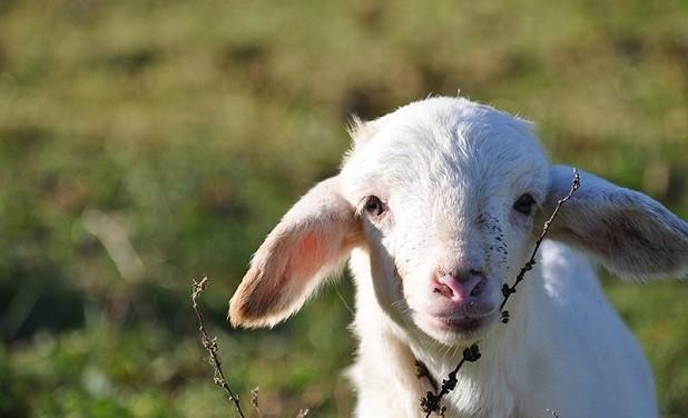 E se dicessimo basta con l'agnello pasquale?