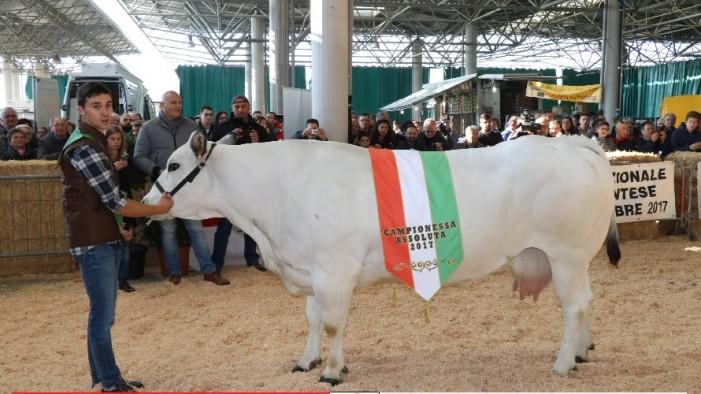 Campioni e campionesse della Piemontese protagonisti a Oleggio