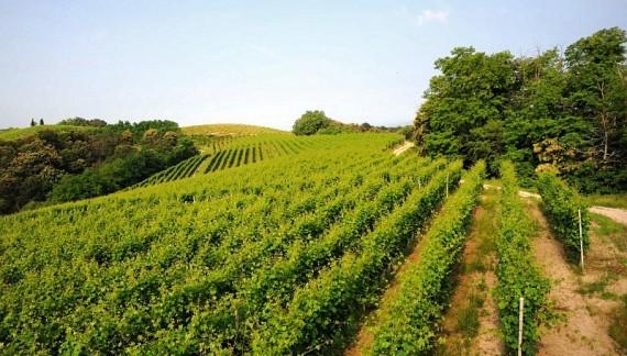 Nasce il fondo IdeA Agro (De Agostini): 80 milioni per le aziende agricole