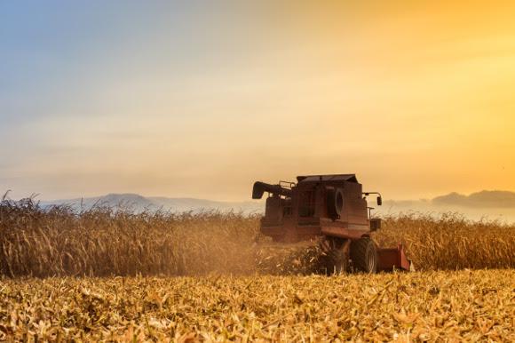 Protocollo d'intesa per migliorare il grano duro italiano