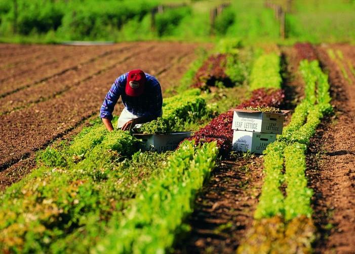 Piemonte, la Regione per i lavoratori stagionali