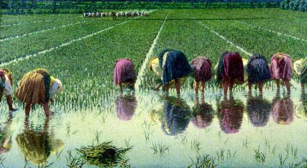 Pittori sociali e magistrati di fama: la chiave del riscatto rurale