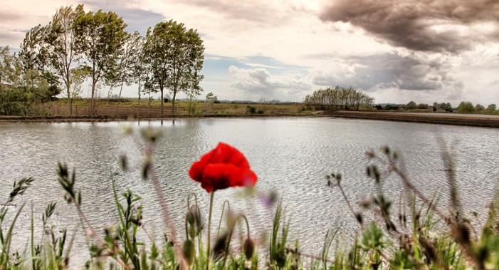 Est Sesia: buona stagione irrigua, ma attenti alle semine in asciutta