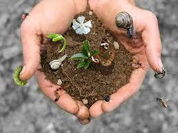 Biodiversità: convegni, censimenti, propositi. Ma pochi fatti