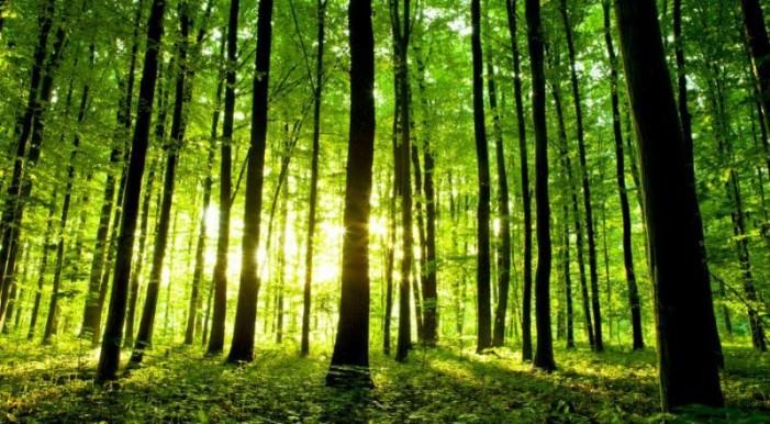 Nel bosco c'è un tesoro: ambiente, occupazione, made in Italy