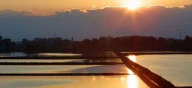 Avvisi ai naviganti: stazione fantasma in mezzo alle risaie