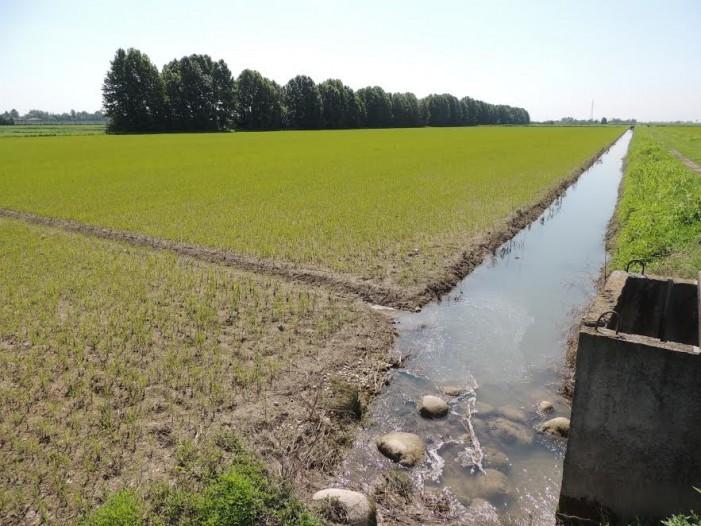 Medwaterice, come risparmiare acqua e produrre meglio