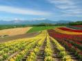 Erbe officinali: fanno bene al reddito agricolo, ai consumatori e all'ambiente