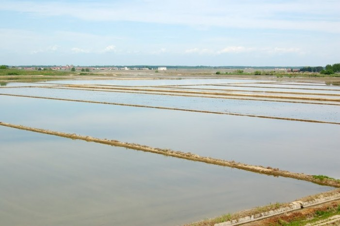 Terre d'acqua tra riso e canali, il Maggio piemontese