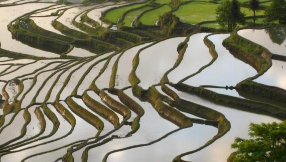 Langhe-Roero-Monferrato: gemellaggio con le risaie terrazzate cinesi