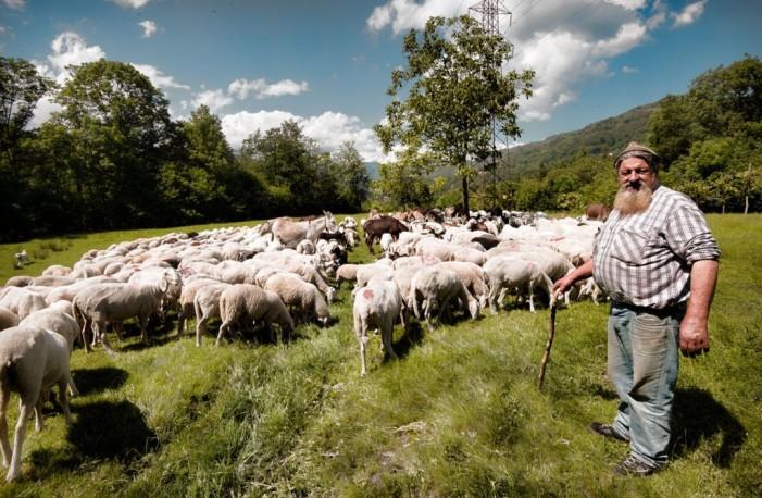 Transumanza: resiste in Italia, cala nel resto d'Europa