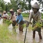 MYANMAR_-_agricoltori_acqua_birmani