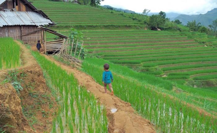 Alt al riso birmano e a quello vietnamita prodotto con i bambini sfruttati