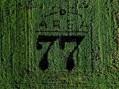 Razza 77, il riso che va a tempo di rock