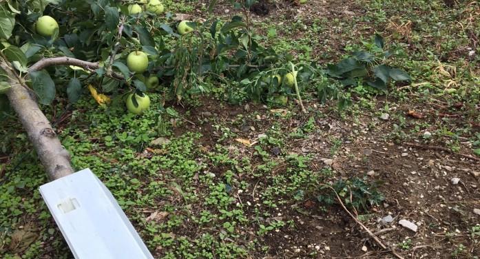 Frutta sotto scacco di grandine e trombe d'aria