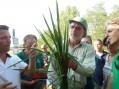 E' italo-afghano-olandese il riso che sfida il caldo (photogallery)