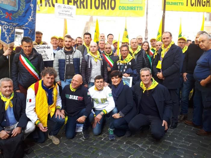 Il flagello dei cinghiali arriva a Montecitorio (photogallery)
