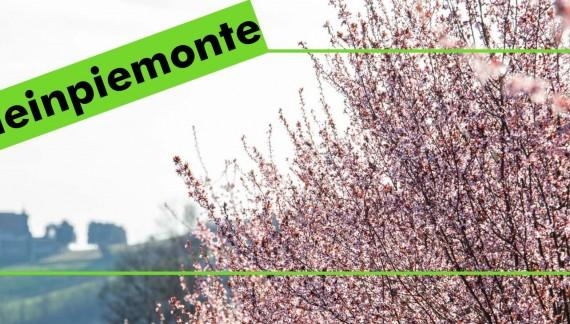 Campagna social per promuovere i prodotti made in Piemonte