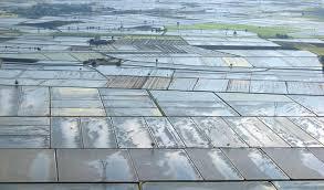 risaiaagromagazine