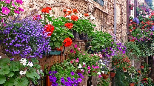 Patto Asproflor-Unione Comuni Montani per rilanciare il florovivaismo