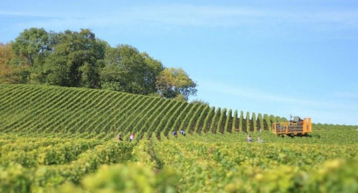 Fondi Psr agli agricoltori: in aprile Piemonte primo al traguardo