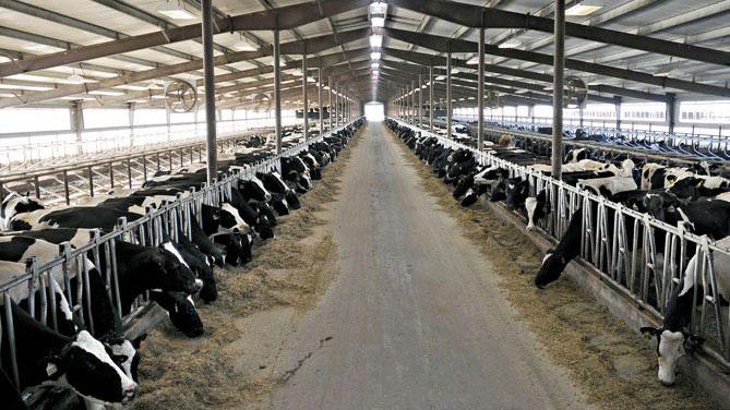 Dall'estero meno latte, ma il prezzo alla stalla cala. L'assessore: presto un marchio Piemonte