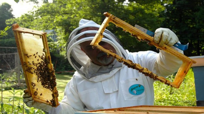 Miele, il Covid-19 fa impennare i consumi (+44%). Ma rischio produzione per il clima