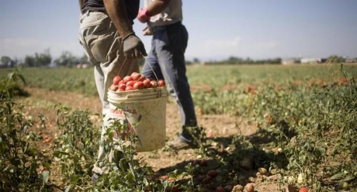 RipartiPiemonte cerca di dare la scossa all'agricoltura