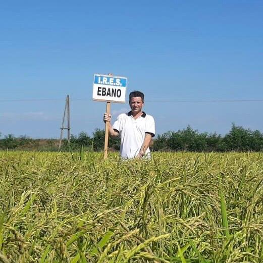 Ebano, il nuovo riso nero: precoce in campo, rapido in cucina
