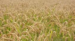 Romano Gianotti, una vita per l'agricoltura