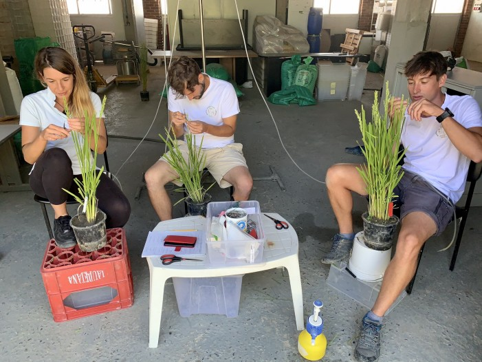 """I ragazzi-breeder con il """"taglia e cuci"""" creano il super-riso (photogallery e video)"""
